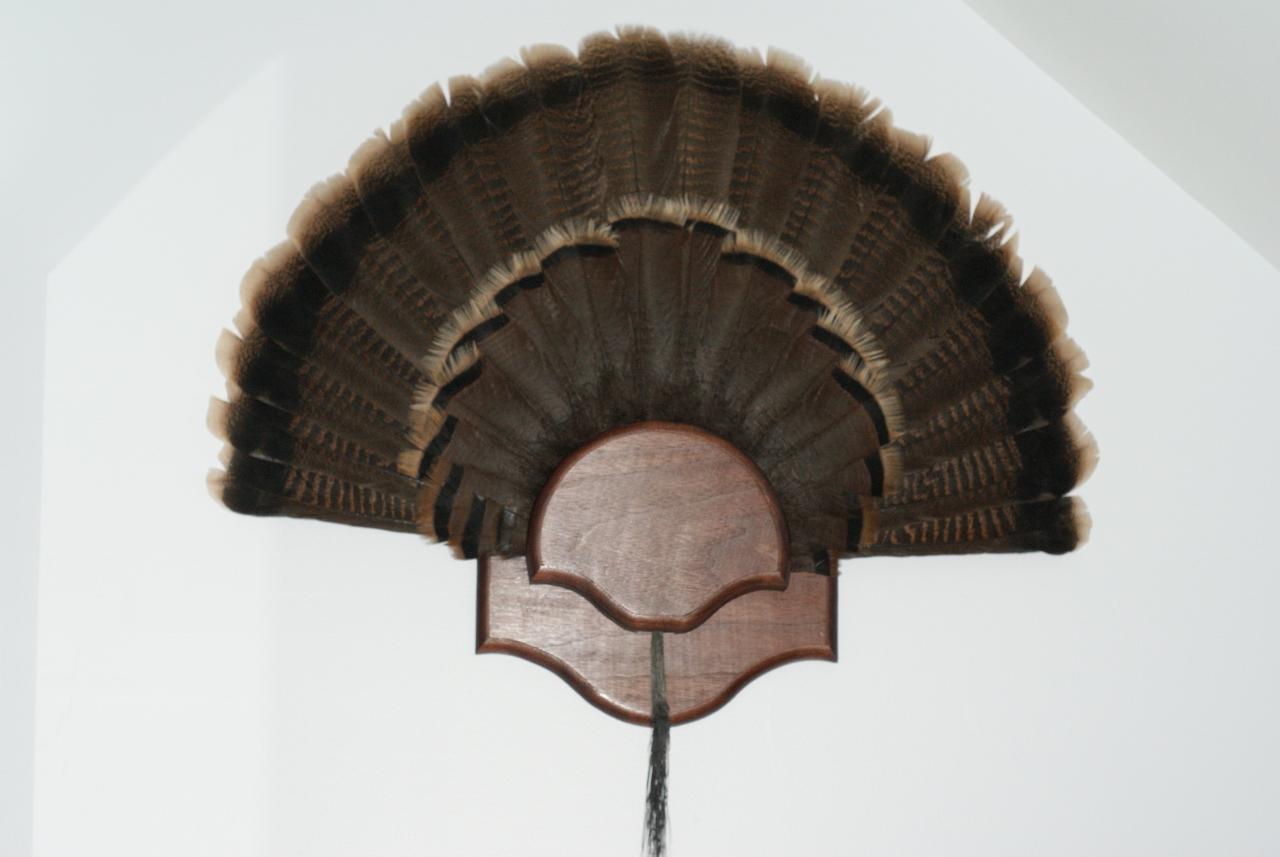 Turkey Fan Mount Day 2 Midnight Woodworking
