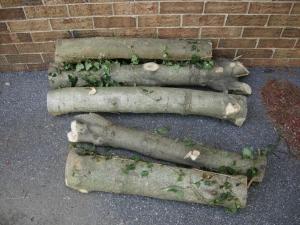 Fresh cut holly logs